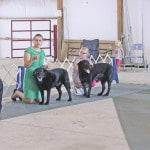 Jenkins Dog Showmanship Sweepstakes winner