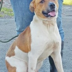 Humane Society Pet of the Week