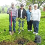 Arbor Day observed April 29 in Greenfield