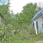 Storm downs trees