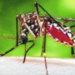 Mosquitoes: A nip in the air
