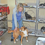 New county humane officer