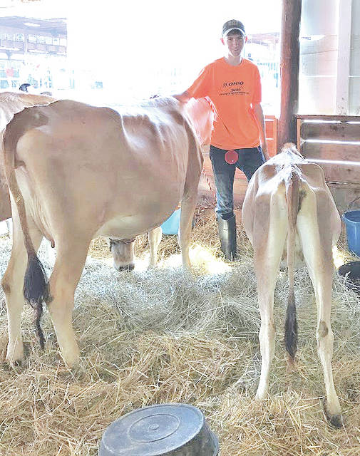 Spencer Rudy is pictured with his dairy cows at the 2017 Highland County Fair.