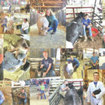 Mowrystown FFA stands out at Highland County Fair