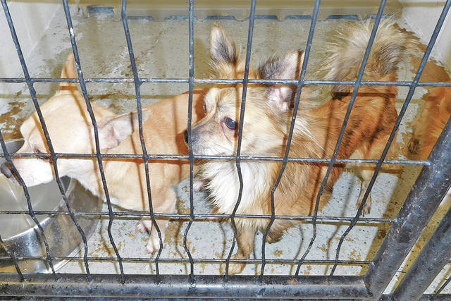These are two of the 17 dogs that were confiscated Jan. 21 from a home on Jones Road near Peebles.