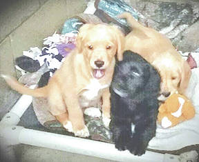 The Highland Humane Society Pets of the Week are three healthy puppies. Their mother is a spaniel/beagle mix and their father is a golden retriever. The puppies have not been named. The Humane Society Animal Shelter is hoping someone will adopt them and name them as their new family wishes. The spaniel/beagle mix mother will be available for adoption as soon as she is spayed. The shelter will also have kittens up for adoption on April 14. If you can give any of the puppies or kittens a good forever home, contact the Humane Society at 9331 SR 124, P.O. Box 471, Hillsboro, Ohio 45133 or call the shelter at 937-393-2110. The shelter is open Tuesday through Saturday from noon to 5 p.m. It is closed Sunday and Monday. The shelter's next Rascal Unit is May 8. The Rascal Unit is a low cost spay/neuter mobile unit that the society brings to the Leesburg Fire Department (back building), every couple of months. It also performs some surgeries and gives shots for dogs and cats. If you are interested, contact the society, make an appointment and pay in advance.