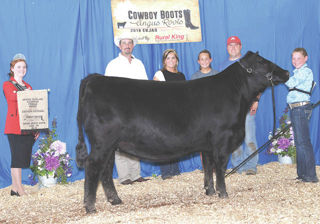 Maplecrest Lady A6240 won Owned Senior Champion Female at the 2018 Eastern Regional Junior Angus Show, June 15-16 in Lima. Carly Sanders, of Leesburg, owns the winning female.