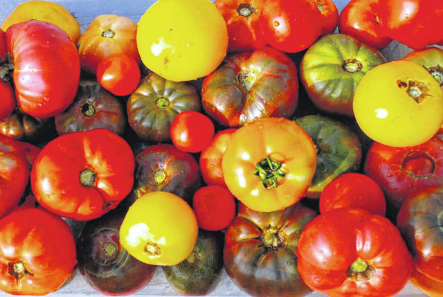 The ninth annual Tomadah Paradah on Saturday, Aug. 11 at Wilmington College will feature 210 tomato and pepper varieties.