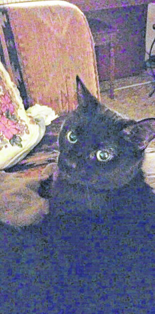 "The last request of Marie Knott was that her nurse and ""adopted daughter"" Elizabeth Molodetz-Schlueter take care of their service animal and friend, Antoinette, or Keeks, a scrawny black cat."