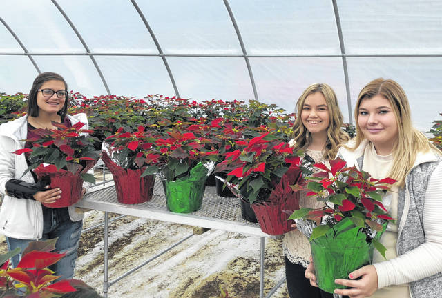 Hillsboro FFA chapter members Kirsten Harp, Emma Parry, and Lexey Hetzel are shown with this year's poinsettias.