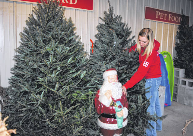 Marketing and Sales Manager Ashley Sexton of Ventura's Feed and Country Store in Hillsboro is shown working on the feed store's selection of Christmas trees.