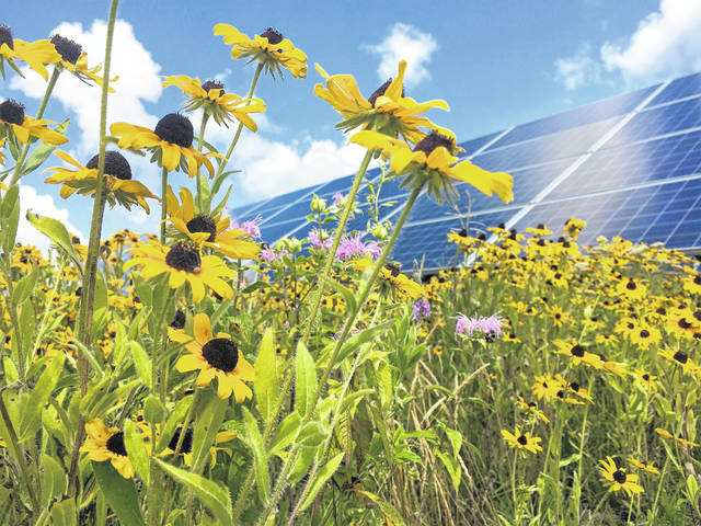 """Combining native plants and wildflowers with photovoltaic technology could be a """"win-win"""" for the proposed Willowbrook and Hecate solar panel farm projects in southern Highland County, according to Robin Ernst of Ernst Pollinator Service."""