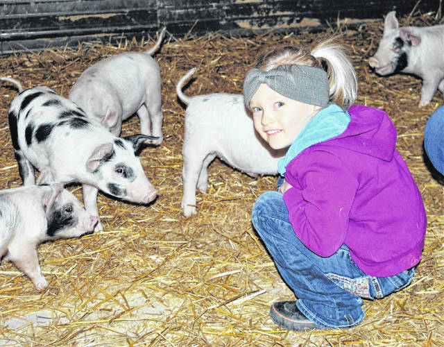 One of the chores assigned to 4-year-old Eliza Stacy is to make sure the pigs are kept happy in the barn or out in the field at Grass Powered Poultry & Meats east of Hillsboro.