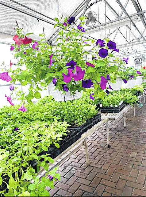 The Fairfield FFA is selling flowers in its greenhouse. The greenhouse will be open weekdays from 7:30 a.m. to 3 p.m. The chapter is selling impatiens, begonias, petunias, geraniums, daisy trade winds, snapdragons, coleus, rose moss, verbenas, calis, dianthus, cucumber, pumpkins, watermelon, peppers, Better Boy tomatoes, zucchini, Roma tomatoes, Mr. Stripey tomatoes, Rutgers tomatoes, sweet 100 tomatoes, broccoli, jalapenos, and Jet Star tomatoes. Prices are $1 four four-inch vegetable pots, $1 for vegetable six packs, $2 for four-inch flower pots, $2 for flower six packs, $10 for hanging basket bags, and $15 for hanging flower baskets.