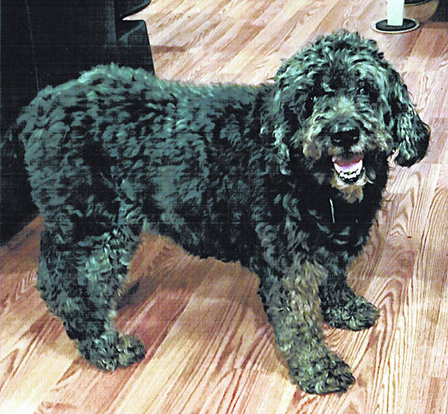Kien, a 14-year-old black female golden-doodle went missing the night of July 4 this year from West Prospect Road. Her family has had her since she was 8 weeks old. She was last seeen wearing a grey collar with colorful dog print and two dog tags. If you have seen her or know where she is, call 937-509-5226 or contact the sheriff's office, dog warden, any Hillsboro veterinarian or the Humane Society Animal Shelter. A $200 reward has been offered for Kien's safe return.