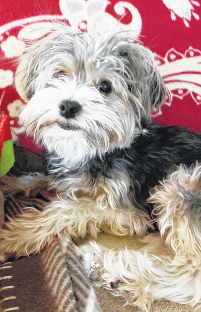 The black and tan, 4-year-old and 7-pound Yorkie named Skippy was lost Thursday in the North Shore Drive area at Rocky Fork Lake. There is a reward for his return. Anyone with information is asked to call 937-365-1680 or 937-768-8483.