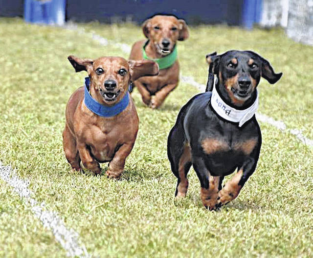 "A ""weiner dog race"" will be one of the returning events at this year's Oktoberfest in Greenfield."