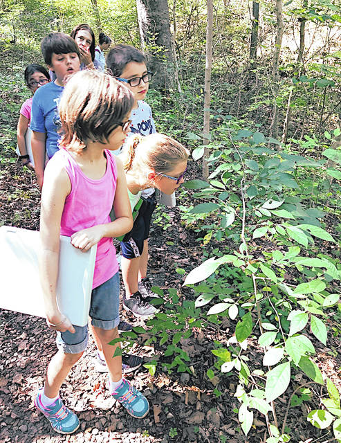 Rainsboro fourth graders closely inspect a pawpaw tree during their time at the Highlands Nature Sanctuary last week.