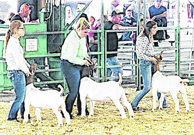 Pictured, from left, are Hillsboro FFA members exhibiting market goats at the Highland County Fair: Kelcie Thornburgh, Ashlie Hillyer and Hillary Hamilton.