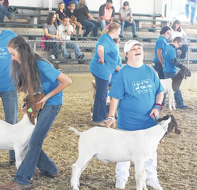 Participant Jessica Polstra gets her goat in position for the judge at the Highland County Fair A Day in the Ring Goat Show.
