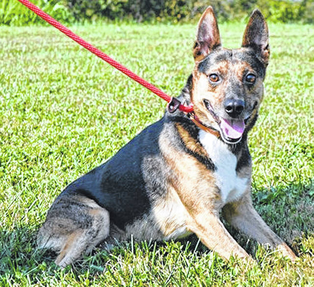 "Toeless Joe, pictured above, is just one of the dogs available for adoption at the pound. ""He's missing part of his foot,"" volunteer Pat Lawrence said."