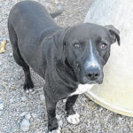 A 2nd Chance Pet of the Week