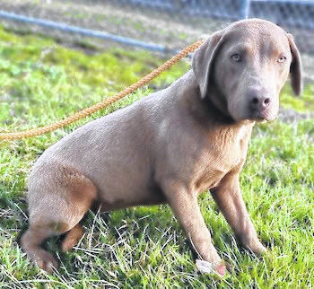 This week's Highland County Dog Pound Pet of the Week is Rayna, an elegant, 6-month-old female of mixed heritage. Rayna has unusual, light green eyes and soft, plush fur. Though she's very apprehensive right now, Rayna is young and trainable. She would make a wonderful companion. To meet Rayna or any of the dogs at the Highland County Pound, call 937-393-8191 and make an appointment with the dog warden. The Highland County Dog Pound is located at 9357 SR 124 east of Hillsboro.