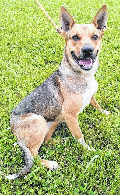 This week's Highland County Dog Pound Pet of the Week is Baby, a gentle, 2-year-old shepherd. Baby was surrendered by her owner after they could no longer care for her. She knows how to sit on command and seems to be house-trained. Baby enjoys hugs and is looking forward to a new home and new friends. She weighs about 45 pounds. To meet Baby or any of the dogs at the Highland County Dog Pound, call the dog warden at 937-393-8191 to make an appointment. The Highland County Dog Pound is located at 9357 SR 124 east of Hillsboro.