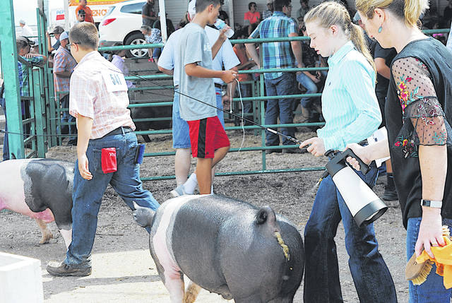 Kids work with their animals during the 2019 Highland County Fair.