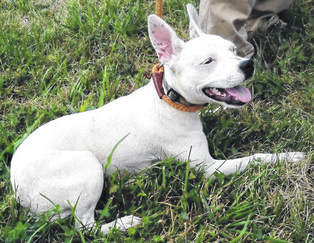 """This week's Highland County Dog Pound Pet of the Week is Sugar, a 1-year-old who's as sweet as soda pop. At around 14 pounds, Sugar is a """"Goldilocks"""" girl — not too big, not too small, not too noisy, not too shy. An owner-surrendered pup, she's friendly and comfortable with people and very excited about finding her new family. To meet Sugar or any of the dogs currently at the Highland County Dog Pound, call the dog warden at 937-393-8191 to make an appointment. The Highland County Dog Pound is located at 9357 SR 124 east of Hillsboro."""