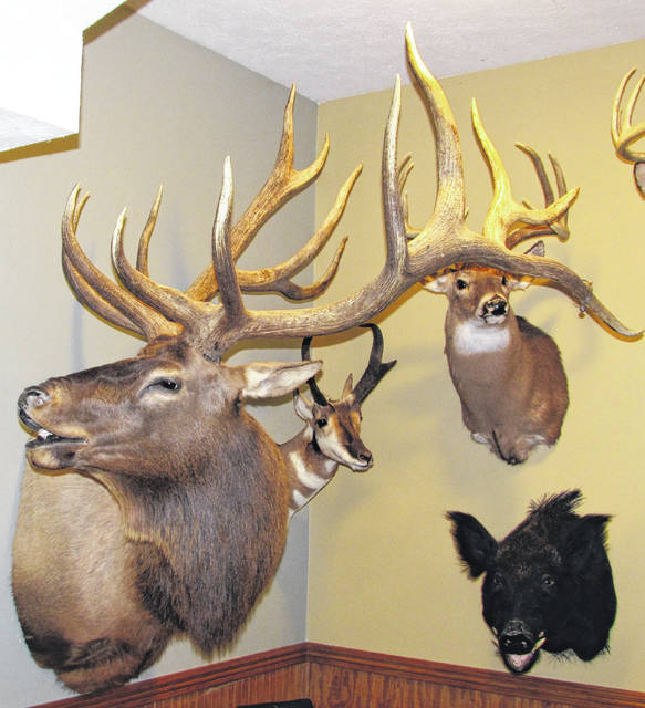 Shown are some of the mounts that adorn the alcove in Dr. Dan Lamb's office at the Hillsboro Bible Baptist Church.