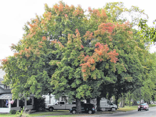 The trees in Highland County are just beginning to turn, such as this one at the corner of South High and East Pleasant streets in Hillsboro.