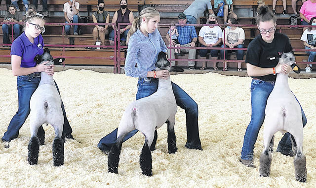 Pictured are middle school ag member Blake Herdman and freshman FFA member Tahia Ames bracing their lambs during the 2020 Highland County Fair Sheep Showmanship competition.
