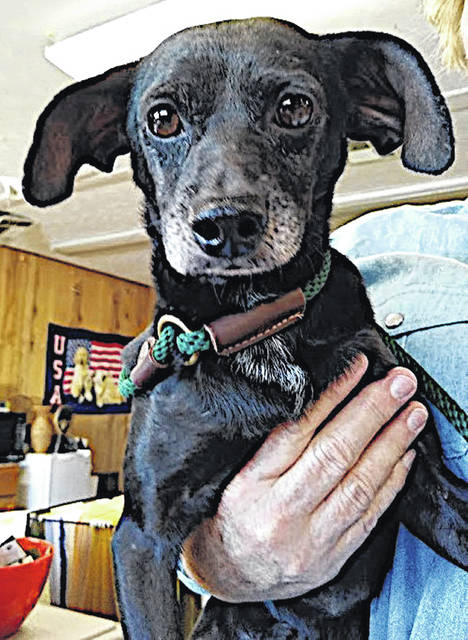 This week's Highland County Dog Pound Pet of the Week is Clyde, a small, young dog that Friends of the Highland County Dog Pound describe as part Houdini, part jumping bean. At just 11-12 pounds and 1 year old, Clyde is agile and can jump straight up and almost fly over a fence but can't wait to be held and hugged. Clyde gets along with other dogs and loves everyone he meets. To meet Clyde or any of the dogs at the Highland County Dog Pound, call the dog warden at 937-303-8191 to make an appointment. The Highland County Dog Pound is located at 9357 SR 124 east of Hillsboro.