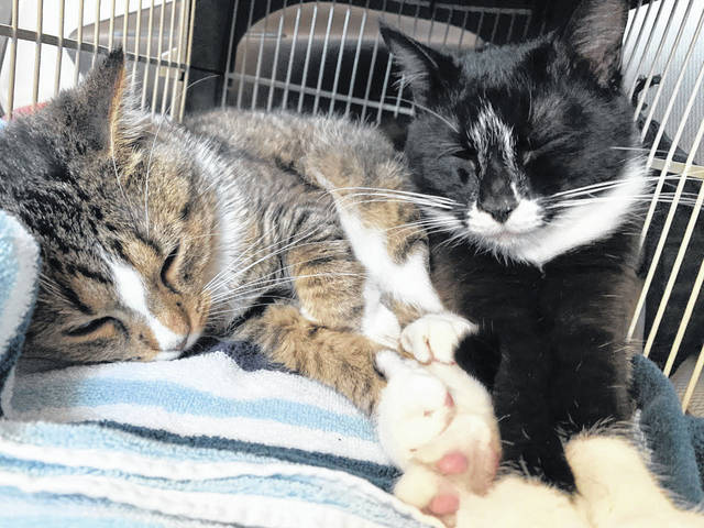 Dove (left) and Tiptoe snooze together in their forever home. The pair had spent over 200 days at the Humane Society of Adams County when a post about Dove on the society's Facebook page gained attention from around the world.