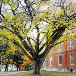 Elm holds unique spot in U.S. history