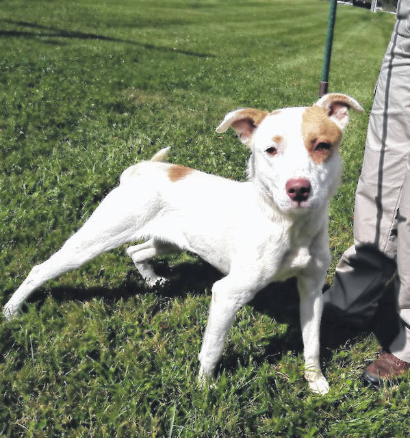 This week's Highland County Dog Pound Pet of the Week is Tony, a happy, hazel-eyed, mixed-breed fella. Tony enjoys giving hugs and stands straight on his hind legs just to do so. Exuberant and good-natured, Tony is a fast learner, and eager to please. Tony is 3 to 4 years old and weighs 42 pounds. To meet Tony or any of the dogs at the dog pound, call the dog warden at 937-393-8191 to make an appointment. The Highland County Dog Pound is located at 9357 SR 124 east of Hillsboro.