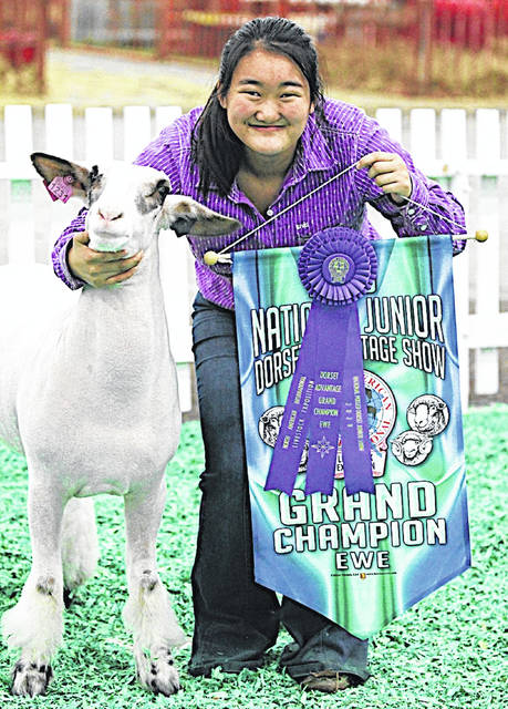 Sophie Young, a junior at Fairfield High School, showed her dorset advantage ewe, Sparkles, last weekend in Louisville, Kentuckey. She was selected the Grand Champion Dorset Advantage Ewe.