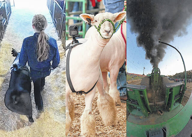 """Pictured (l-r) are Mattie Caldwell walking her pig through the hog barn, """"Esme"""" being shown by the Roehm sisters in the Southdown sheep breeding show and a scene from tractor pulls at the Highland County Fair, will each be shown in the iFarm Immersive Theatre at the 2021 Farm Science Review."""