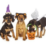 Halloween 2015 a time for tricks, treats and trends