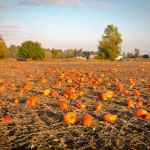 Ohio floods, then dry conditions, leads to fewer, smaller pumpkins for Halloween