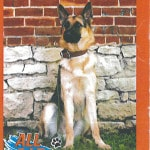 Search and rescue dog training slated Sunday