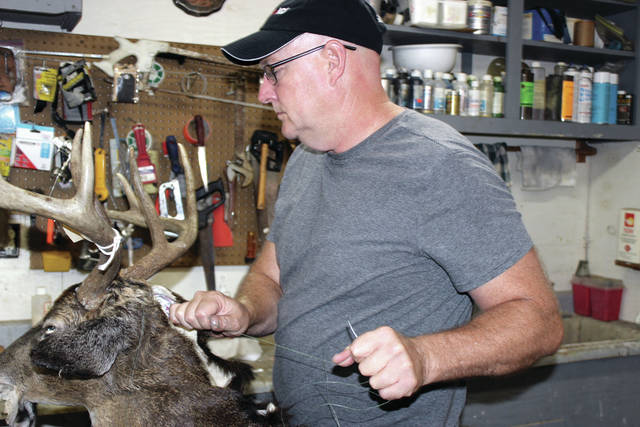 Dave Shellhaas sews the detailed and preserved hide of a deer onto a styrofoam mount. The hide must be carefully removed, scraped clean, salted, and dried in sawdust before being preserved in a chemical bath and prepared for mounting.