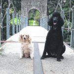 City honors therapy dogs John and Harley
