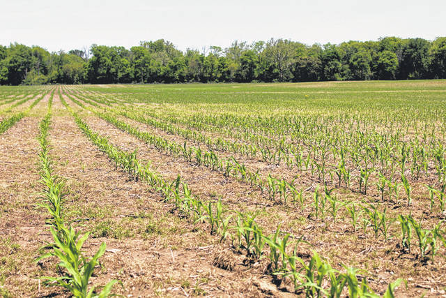 New corn plants emerges from the soil at a farm west of Greenville. Darke County farmers are enjoying a better planting season than last year, which was hampered by excessive rain and cold temperatures.