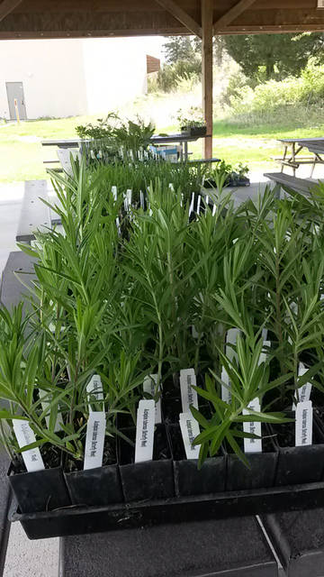 The Darke County Parks Native Plant sale pick-up will be Saturday.