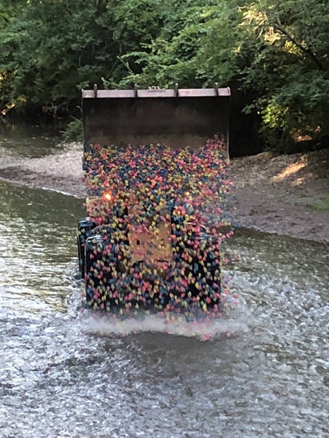 Ducks are dropped into Mosquito Creek on Thursday as part of Big Brothers Big Sisters of Shelby and Darke County's 12th annual Duck Derby and Duck-N-Run 5K at Tawawa Park in Sidney.