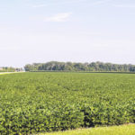 """Darke County soybean farmers urged to check for """"frogeye"""""""