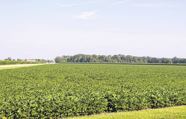 "Darke County farmers are being advised to look for ""frogeye"" leaf spots on their soybeans. If not contained, frogeye may lead to a 30- or 40-percent yield reduction."