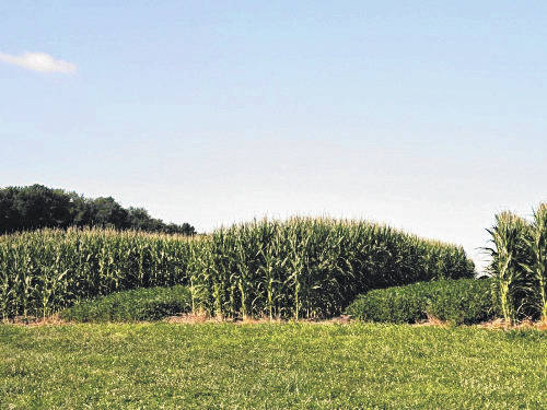 The Triplett-Van Doren No-Tillage Experimental Plots were established in 1962 and are the longest continually maintained no-till research plots in the world.